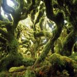 Поросшие мхом деревья