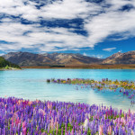 Цветы на озере в Новой Зеландии