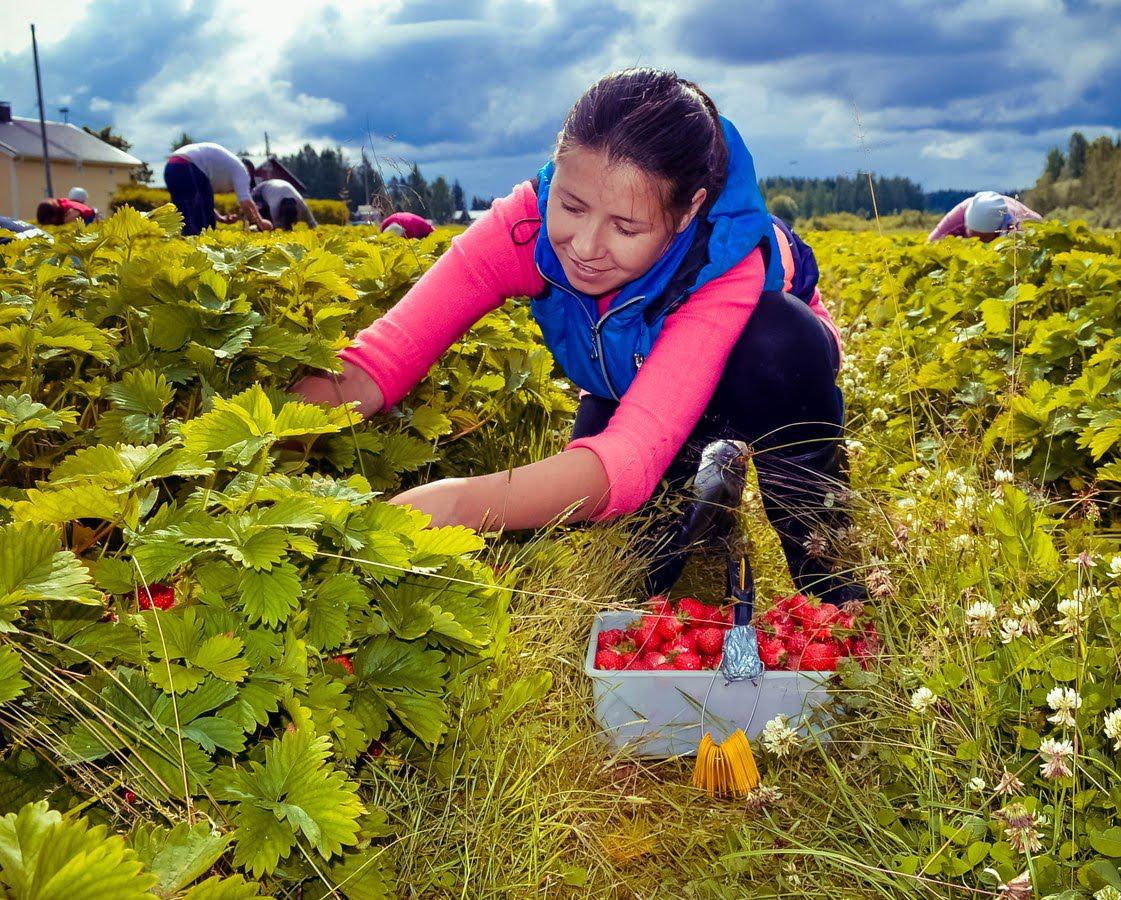 Поиск работы в Финляндии: самые доступные способы для иностранцев