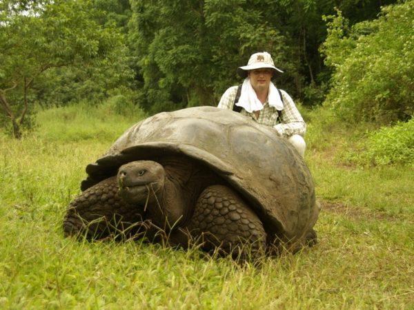 Волонтёр с галапагосской черепахой