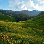 Цветущие холмы в горах Абхазии