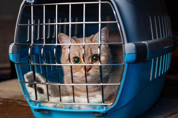 Кошка в твёрдой переноске