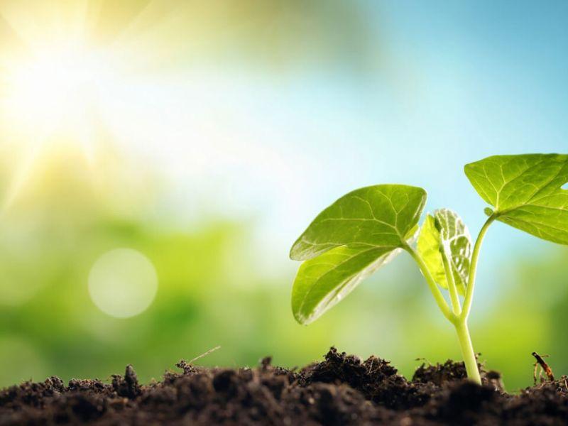 Тест: Насколько вы заботитесь об экологии?