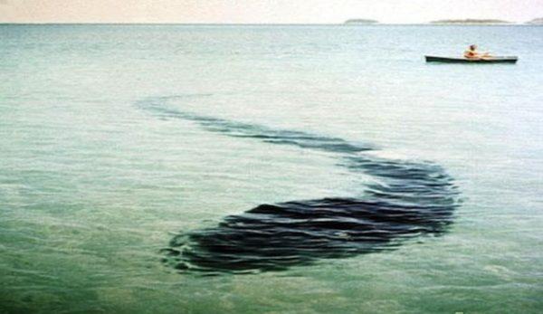 Морское чудовище у острова Хук